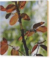 Red Leaf Wood Print