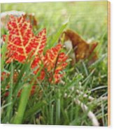 Red Leaf In Grass Wood Print