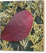 Red Leaf On  Arborvitae Leaves Wood Print
