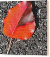 Red Leaf On Asphalt Wood Print by Douglas Barnett
