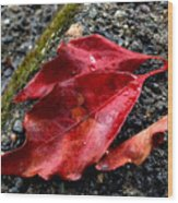 Red Leaves And Concrete Wood Print