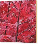 Red Leaves And Stems 2 Pd Wood Print