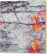 Red Leaves Growing By The Wall. Autumn Wood Print