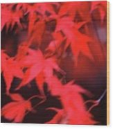 Red Leaves In Fall  Wood Print
