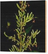 Red Lilac Seeds Wood Print