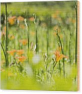 Red Lilium Wood Print
