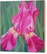 Red Lilly Wood Print