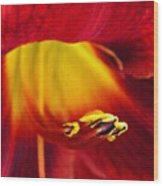 Red Lily Center 4 Wood Print