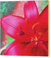 Red Lily Wood Print