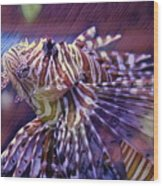 Red Lionfish Art Wood Print