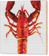 Red Lobster - Full Body Seafood Art Wood Print