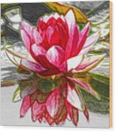 Red Lotus Flower Wood Print