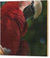 Red Macaw 2 Wood Print