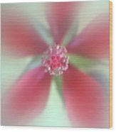 Red Macro Floral Art Wood Print