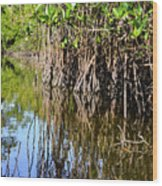 Red Mangrove Roots Reflections In The Gordon River Wood Print