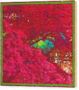 Red Maple 4 Wood Print