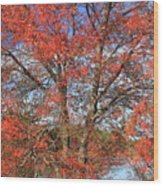 Red Maple Foliage Kaleidoscope Wood Print