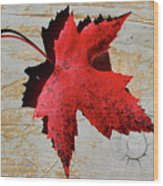 Red Maple Leaf Wood Print