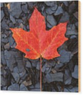 Red Maple Leaf On Black Shale Wood Print