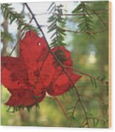 Red Maple Leaf On Hemlock Wood Print