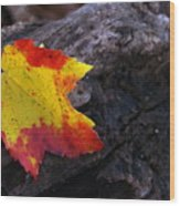 Red Maple Leaf On Old Log Wood Print
