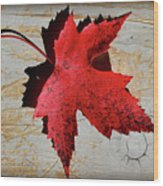 Red Maple Leaf With Burnt Edge Wood Print