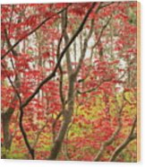 Red Maple Leaves And Branches Wood Print