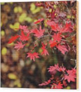 Red Maple Leaves Wood Print