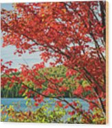 Red Maple On Lake Shore Wood Print