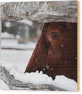 Red Milking Devon Snowflakes Wood Print