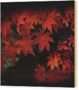 Red  Momiji Wood Print
