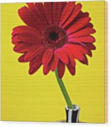 Red Mum Against Yellow Background Wood Print