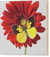 Red Mum With Dogface Butterfly Wood Print