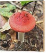 Red Mushroom 2 Wood Print