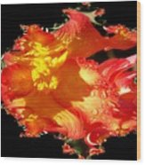 Red N Yellow Flowers Wood Print