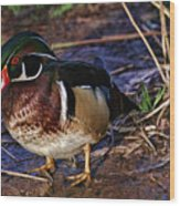 Red Nose Duck Wood Print