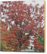 Red Oak 2 Wood Print