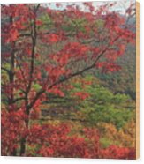 Red Oak And Millers River Valley Wood Print