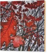 Red Oaks Wood Print