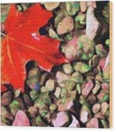 Red On The Rocks Wood Print by Jeff Kolker