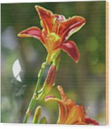 Red Orange Day Lilies I Wood Print