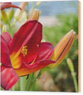 Red Orange Lily By The Lake Wood Print