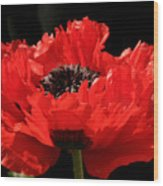 Red Orange Oriental Poppy Wood Print