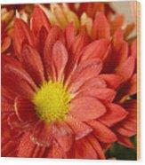 Red Orange Shasta Wood Print