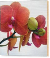 Red Orchid Flowers 02 Wood Print
