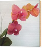 Red Pink Golden Orchid Flowers 03 Wood Print