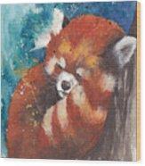 Red Panda Sleeping Wood Print