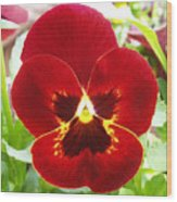 Red Pansy Wood Print