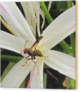 Red Paper Wasp And Spider Lily 000 Wood Print