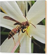 Red Paper Wasp And Spider Lily 001 Wood Print